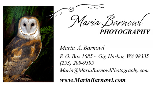 Maria Barnowl Photography