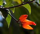 Orange Flower, stock photo