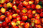 Pike Place Market cherries, stock photo